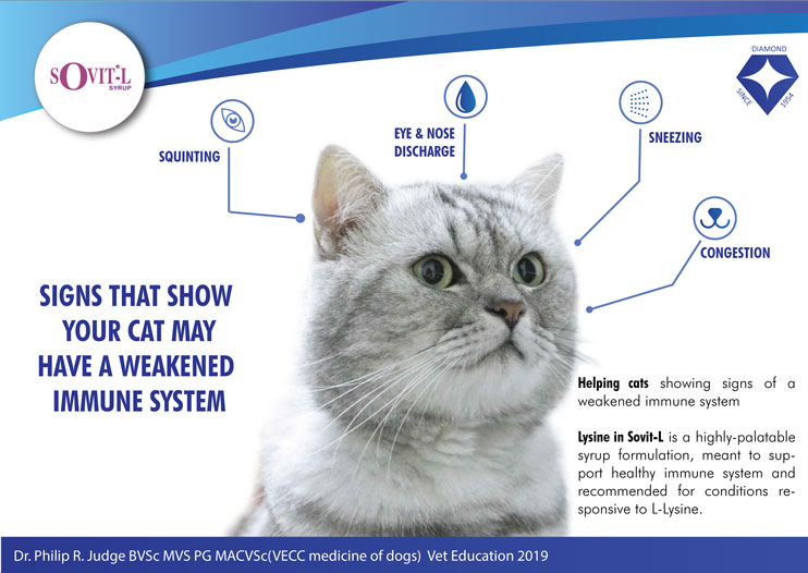 Signs and symptoms of a weakened immunity in cats due to lysine deficiency