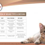 Wound types and dressing in animals topical lysine