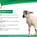 Stages of wound healing in animals