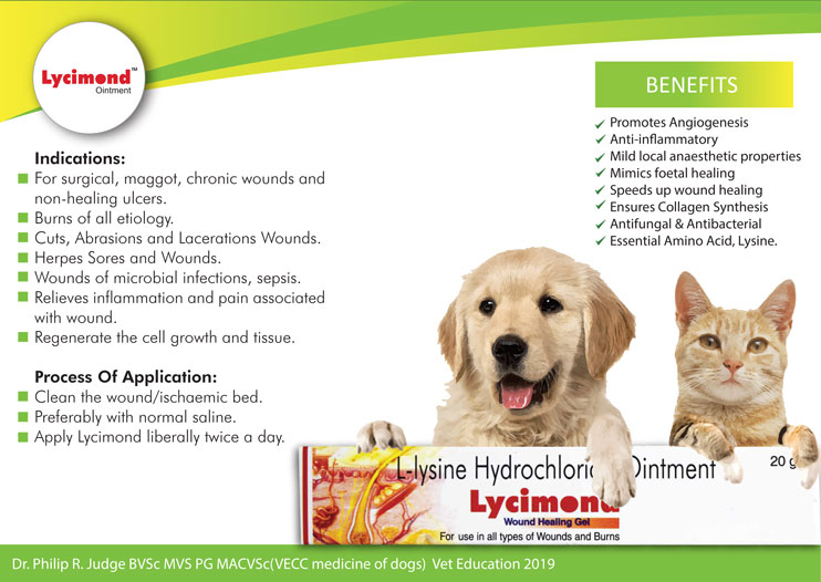 Tissue regeneration with topical lysine ointment diamond drugs